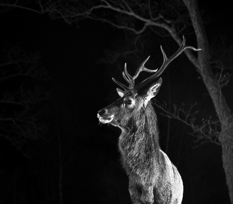 photoblog image The Laird of the glen