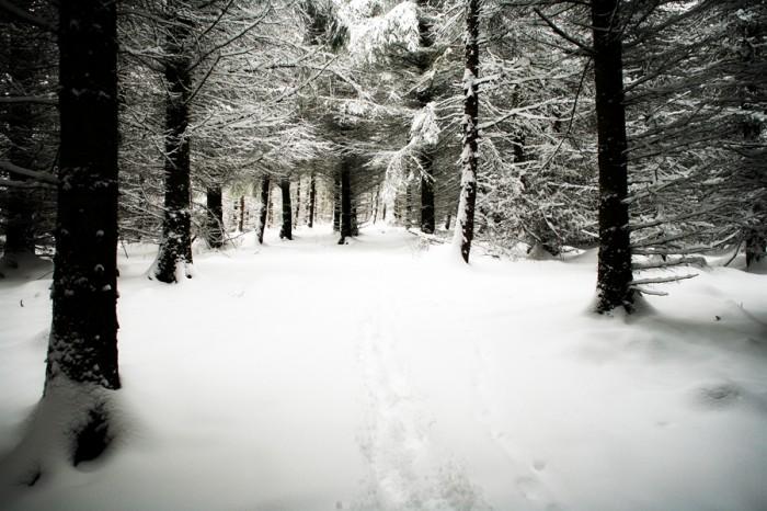 photoblog image Narnia